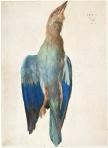Albrecht Dürer - Dead Blue Roller