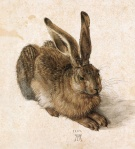 Albrecht Dürer - The Hare - 1502