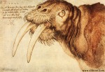 Albrecht Dürer - The Walrus - 1521