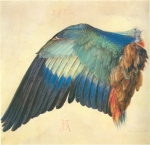 Albrecht Dürer - Wing of a Blue Roller