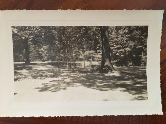 IMG_1982