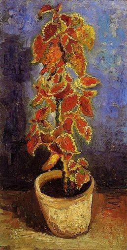 Van Gogh - Coleus Plant in a Flowerpot - 1886