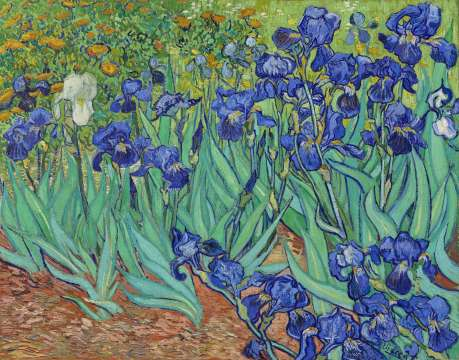 Van Gogh - Irises - 1889